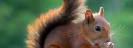 ecureuil epargne